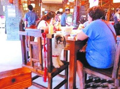 武汉一餐馆宠物狗与人同桌进餐